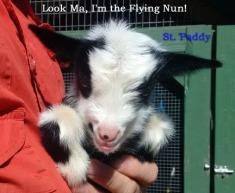 Paddy NB 1