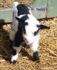 Paddy NB 5